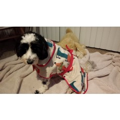 Towelling Doggie Coat - 17th November